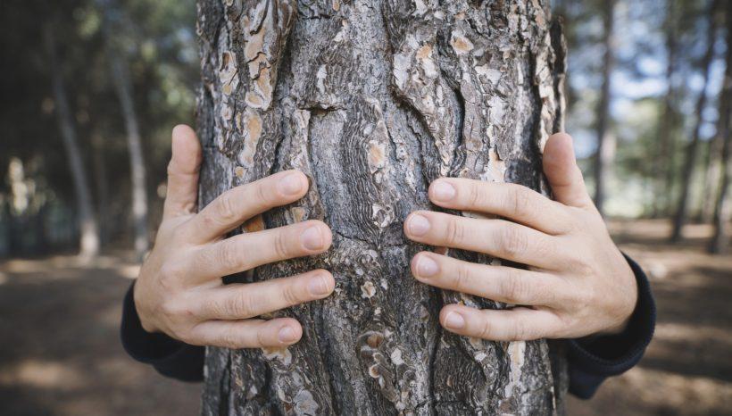 Abrazar el árbol